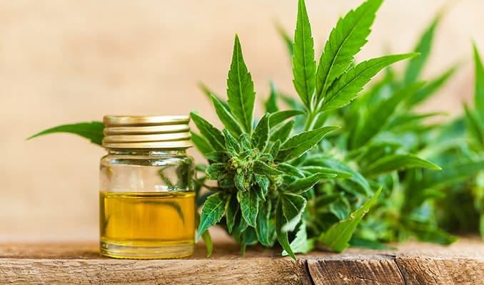 effetti olio-cbd-cannabis