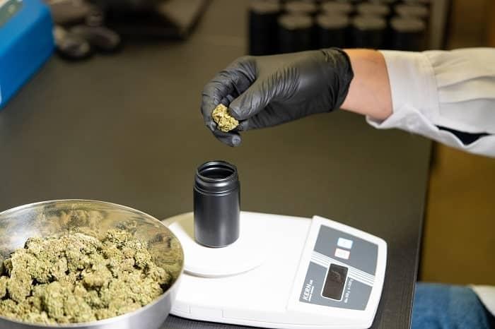 Die Linien bewegen sich und könnten die Ankunft einer Cannabis-Zulassung in Frankreich sehen