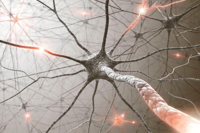 Le système endocannabinoïde est responsable des effets de l'huile de CBD sur le système nerveux
