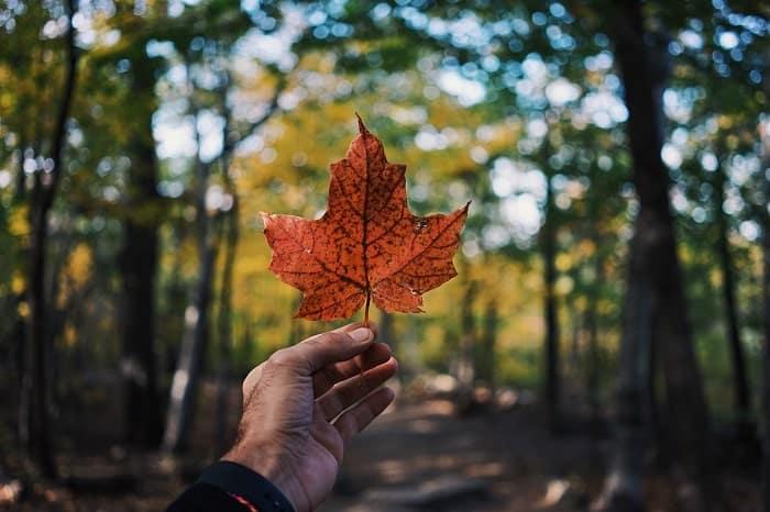 Legalizzazione della cannabis in Canada, prima analisi
