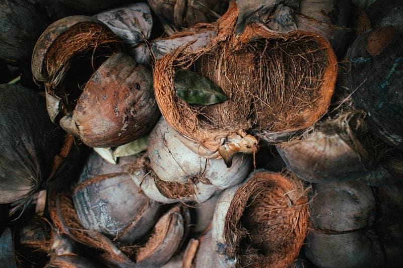 Les fibres de coco fournissent un environnement propice à la culture du cannabis light