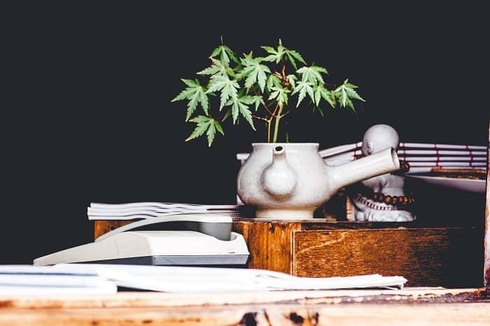 Infuso di cannabis CBD o tisana