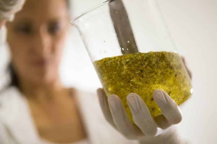 Testare la canapa garantisce l'assenza di THC-min