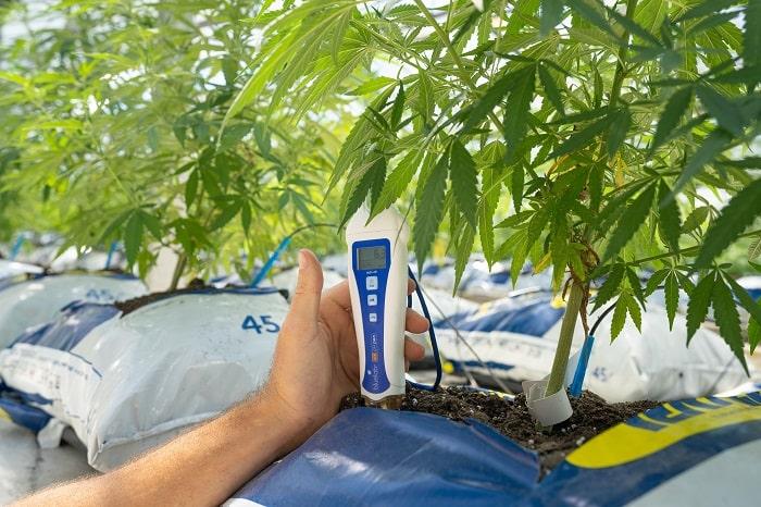 Controllare la coltivazione della cannabis oggi è molto più facile