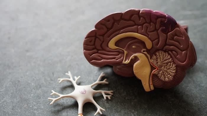 Arte spiega come il nostro cervello reagisce alla cannabis