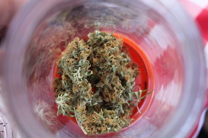 I fiori come le foglie possono essere usati in un'infusione di cannabis