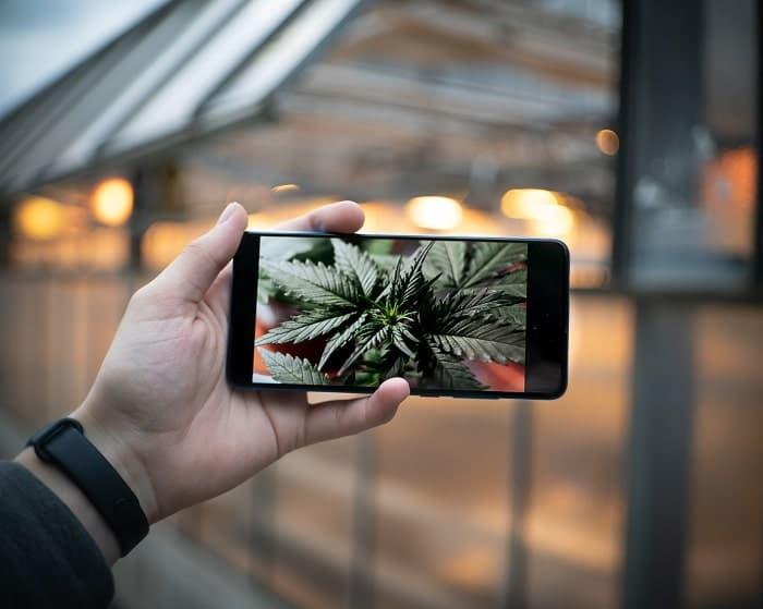 Giochi di cannabis CBD gratuiti: 5 app da scaricare ad occhi chiusi