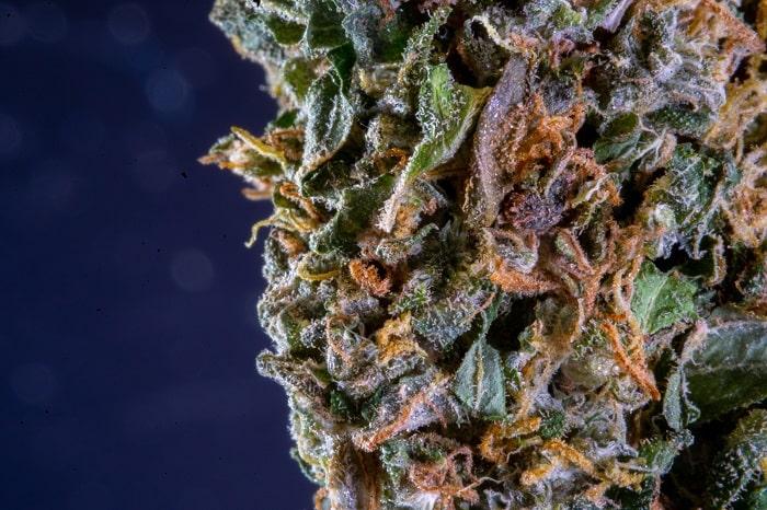 Der Cannabiskonsum in Spanien findet größtenteils in Cannabis Social Clubs statt