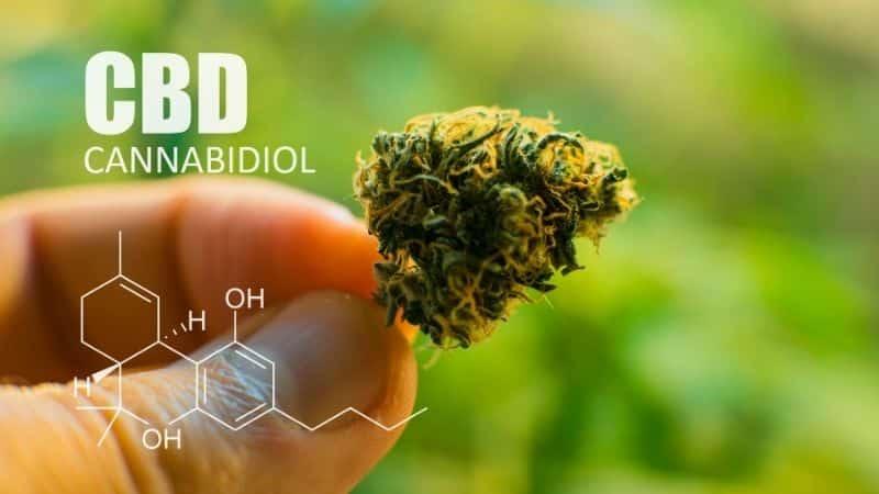 What-the-CBD-Molecule