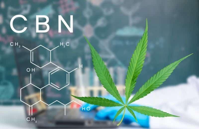 Auf dem Boden enthält Cannabis wenig oder kein CBN