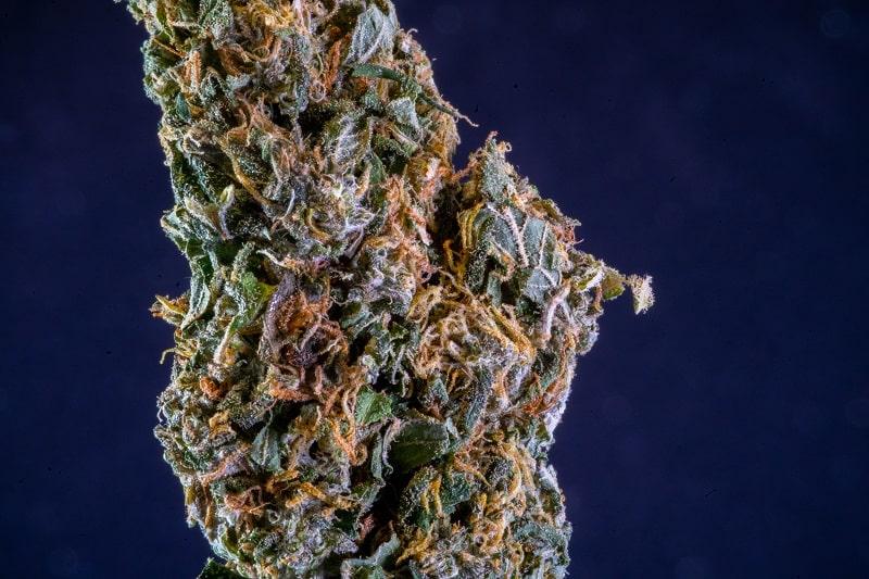 Infuser une fleur de CBD permet de libérer ses cannabinoïdes dans l'huile de massage
