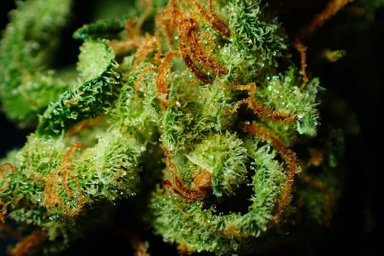 entzündungshemmende Cannabinoide min