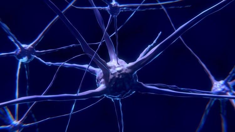 cellules nerveuses min