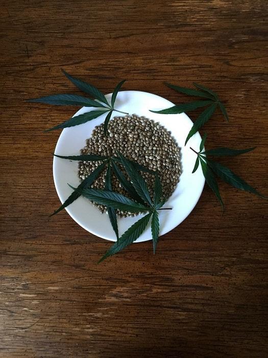 recette cannabis graines de chanvre min