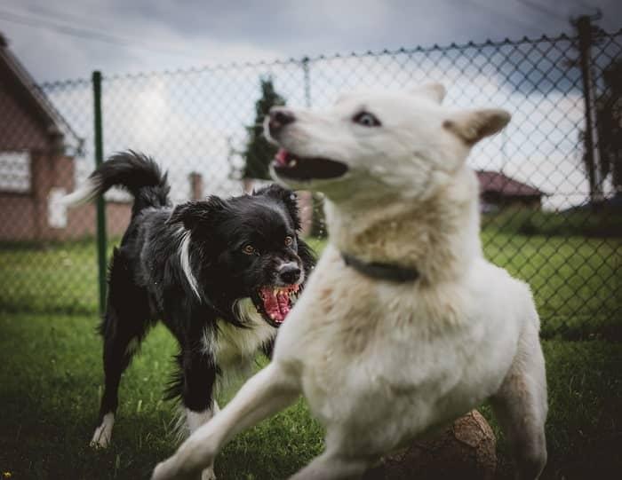 chien agressif min