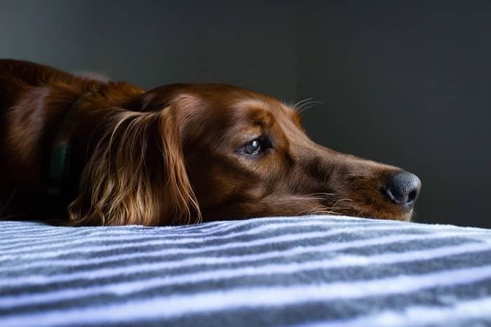 chien agressif ou chien avec problème min