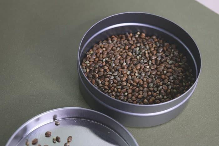 propriétés nutritives des graines de chanvre min